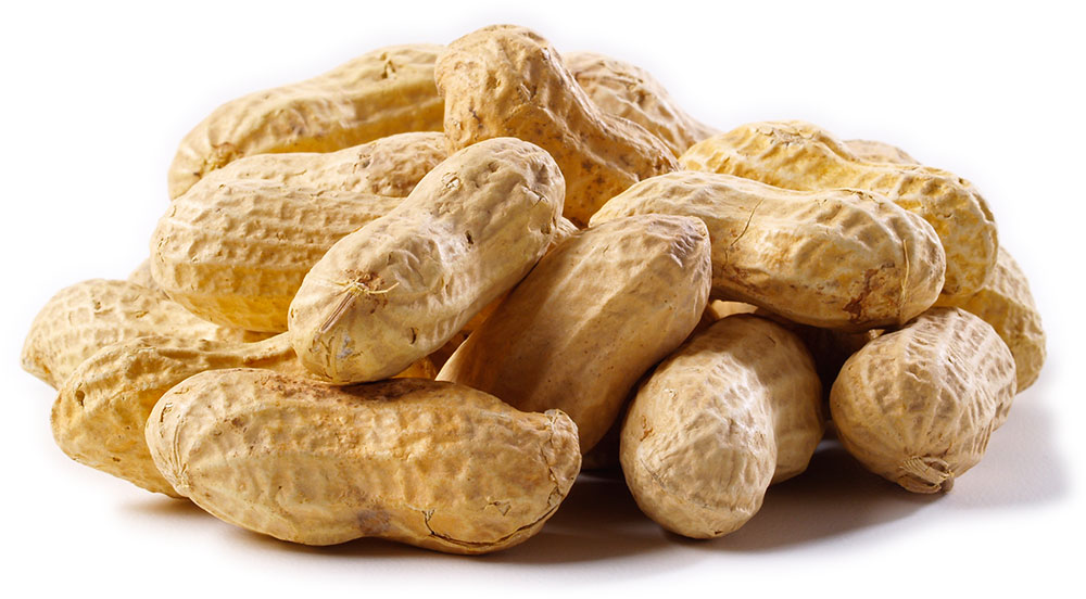 raw peanut in shell